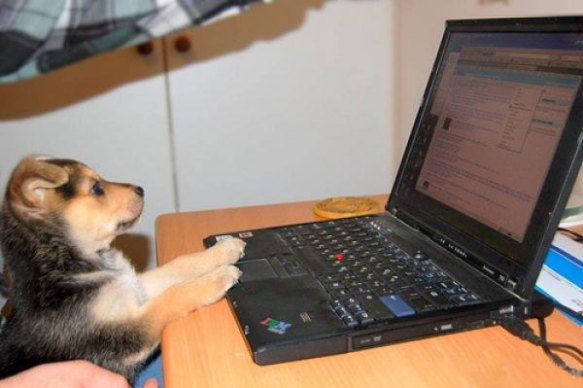 Doggy Using Computer